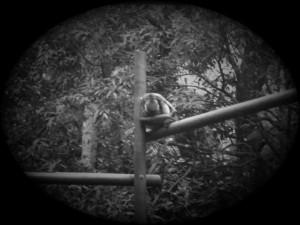 zoo 002